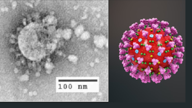 Photo of Coronavirus (Covid-19) invaded our world but do you know there is 5 other deadly virus that mankind had battled?
